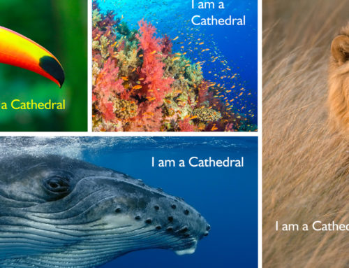I Am A Cathedral Campaign