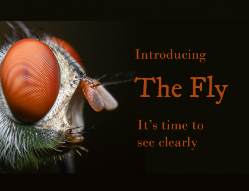 Introducing The Fly