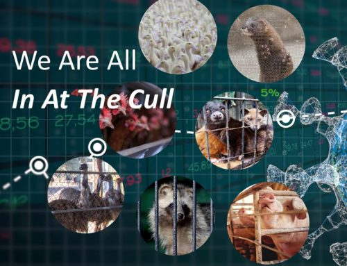 We Are All In At The Cull